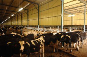 ip69k led tri-proof light application for cattle farm