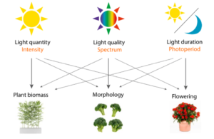What type of light does plant grow need?